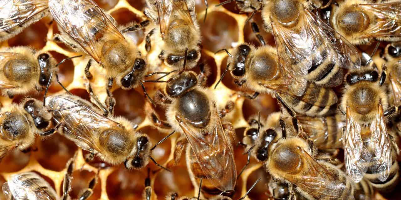 Štartaj kot čebelar: Čebele – marljive žuželke