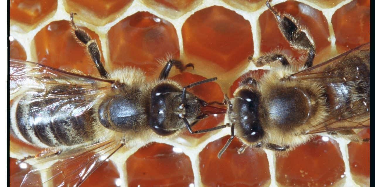 Štartaj kot čebelar: Čebelarjeva opravila