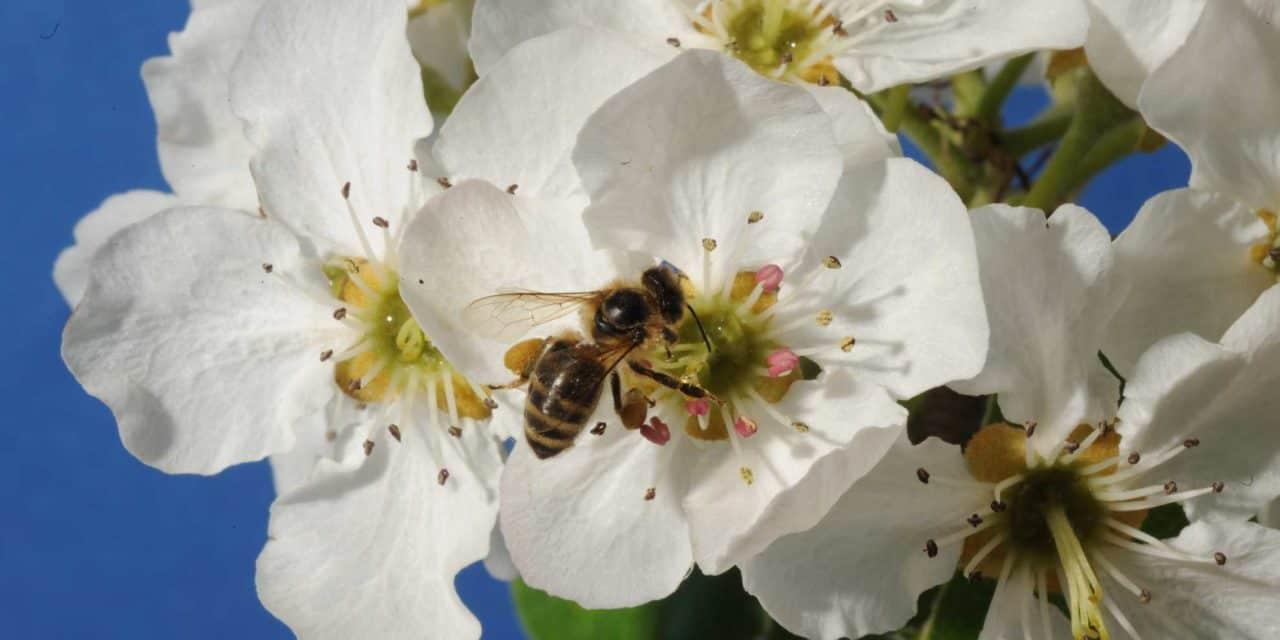 Štartaj kot čebelar: Iz cveta na cvet …