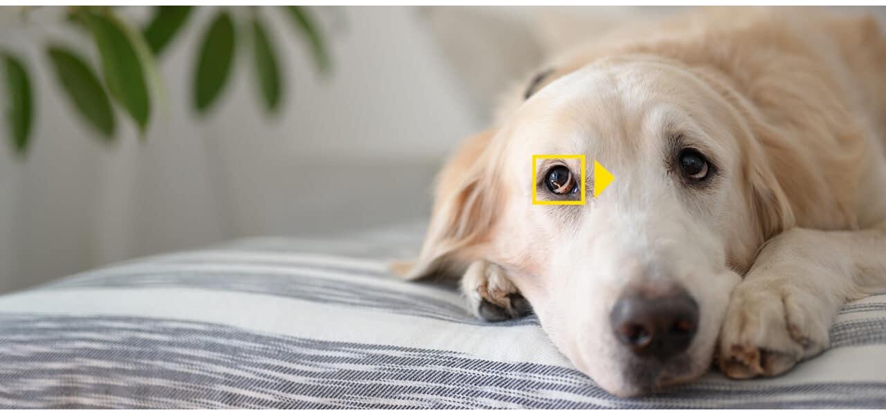 Posodobitve programske opreme za brezzrcalne fotoaparate Nikon Z vključujejo podporo za telekonverterje in zaznavanje živali
