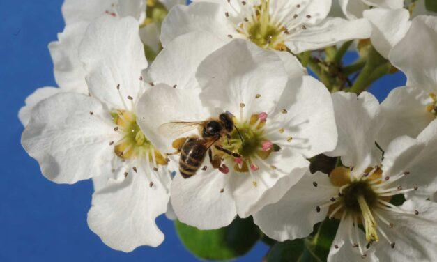 Kje postaviti čebelnjak