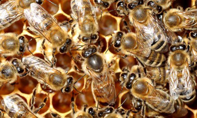 Po številu čebelarjev smo v svetovnem vrhu